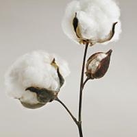 El algodón, fibra confortable