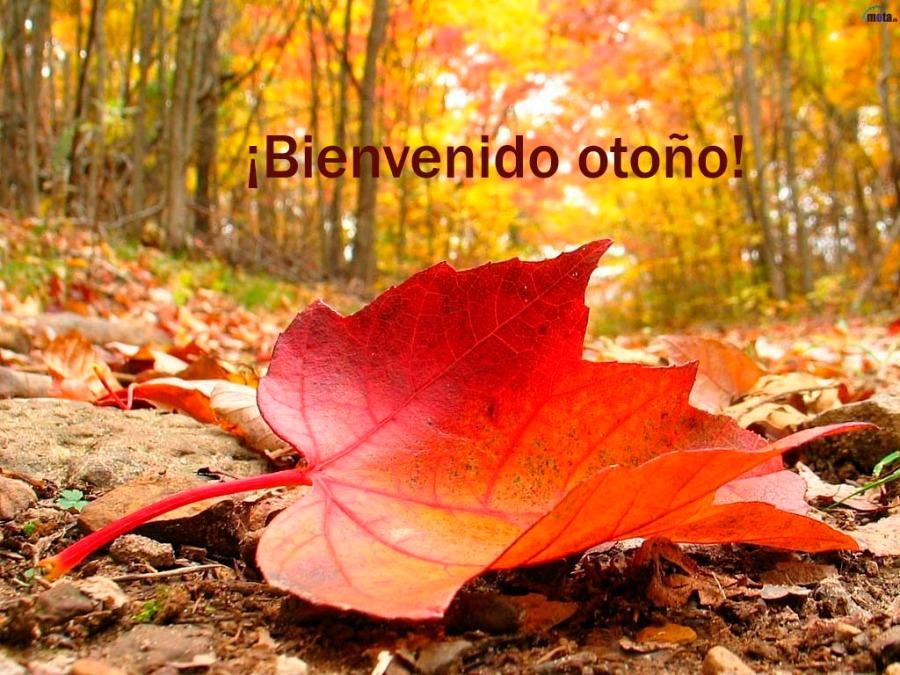 Bienvenido otoño - Villalba Interiorismo