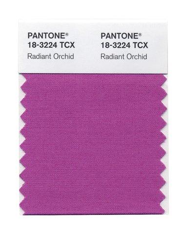 Orquidea radiante color Pantone - Villalba Interiorismo (2)