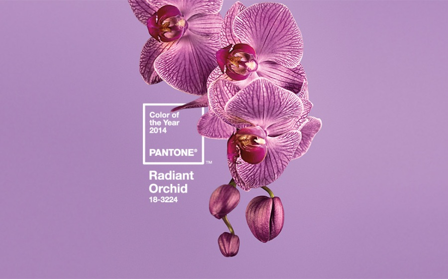 Orquidea radiante color Pantone - Villalba Interiorismo